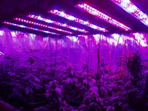 2 best led grow lights scaled 2 300x225 - 8 Common Mistakes People Make When Using LED Growing Lights